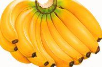 Четвёртое по значимости пищевое растение на планете